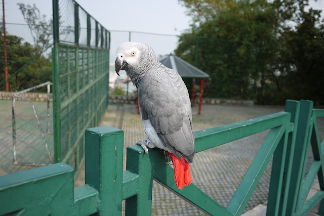 parrot at Guia Hill in Macau
