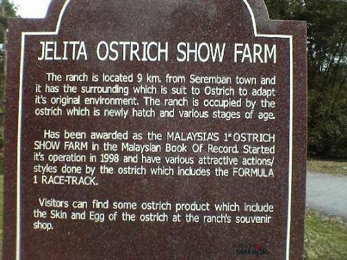 Jelita-Ostrich-Farm