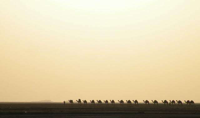 Camel caravan in an Ethiopian desert