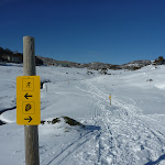 Following the posts with yellow signs (299665)