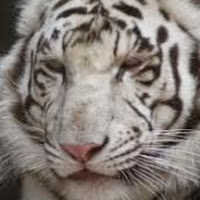 A Cat's avatar