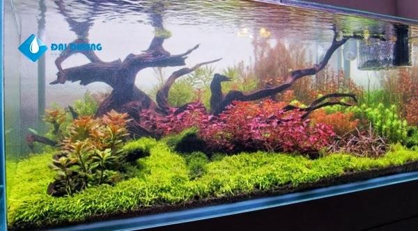 hồ thủy sinh theo phong cách hà lan 4
