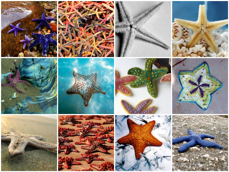 Starfish Photo Collage