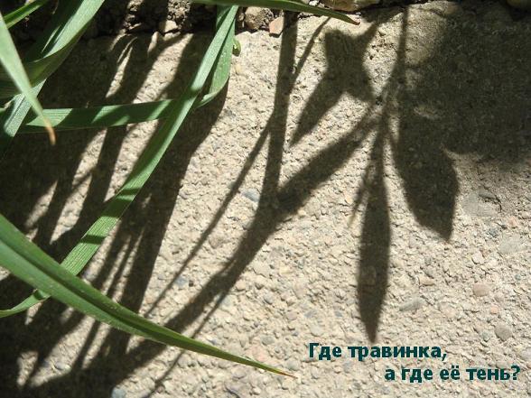 фото красивые тени