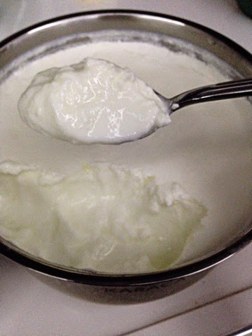 ev-yoğurdu