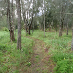 Grassy track (55904)