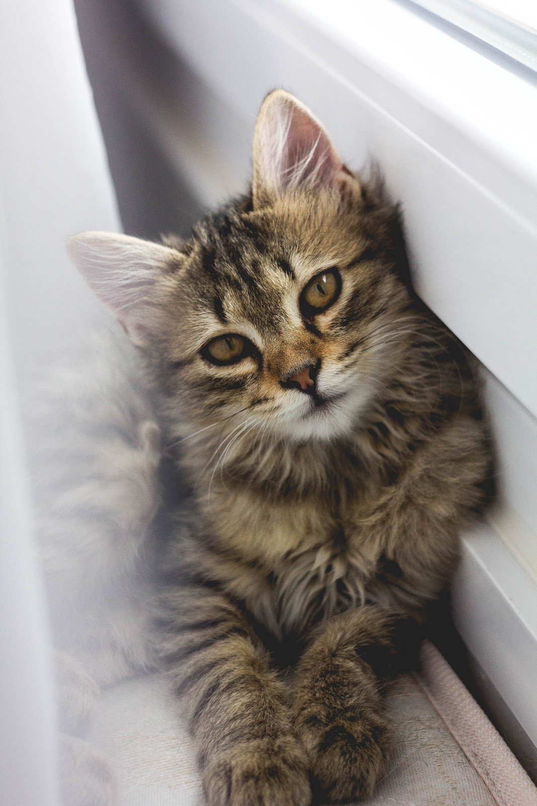 Mirtazapine for cats