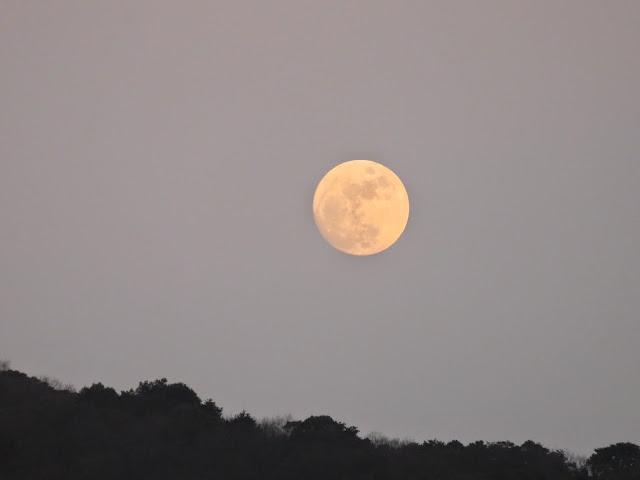 曽根干潟からの月-2