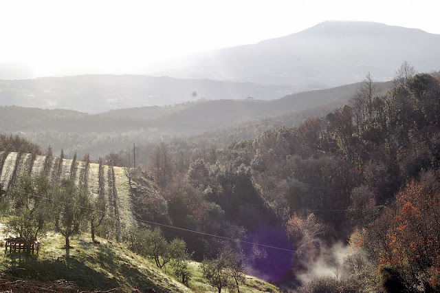 Vineyard and olive grove with morning frost and Mount Amiata in the back