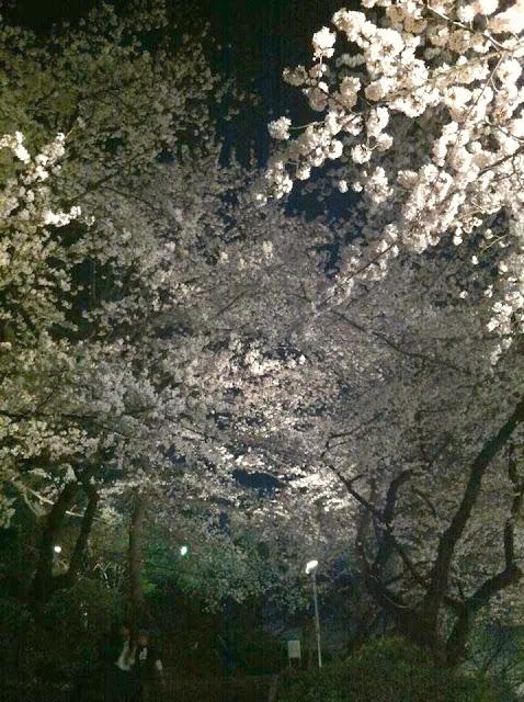 横浜みなとみらいノルディックフィットネス教室で夜桜満喫の様子(2012年4月11日)