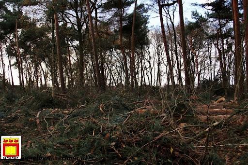 houtoogst pritter Overloon 25-11-2012 (9).JPG