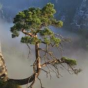 Сонник: дерево упало