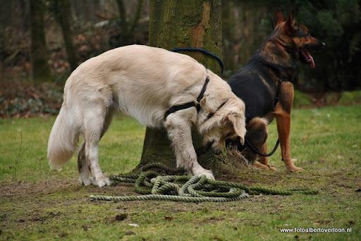 houthakkersmeewerkdag overloon 3-03-2012 (49).JPG