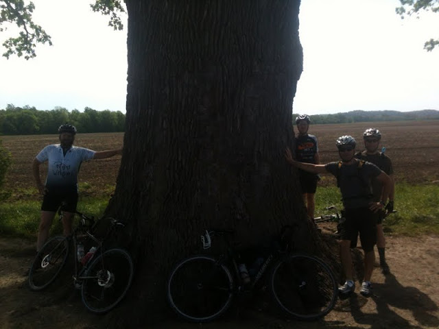 Big Ass Tree near Columbia, MO