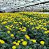 Đơn hàng trồng rau trong nhà kính cần 6 nam làm việc tại Aichi Nhật Bản tháng 07/2017