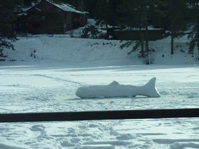 Snow Trout