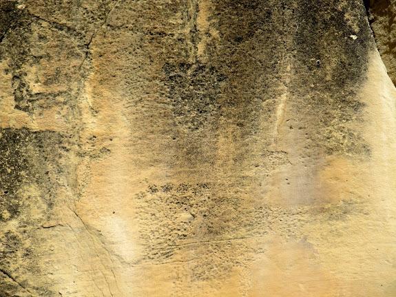 Bear print petroglyphs along Gordon Creek