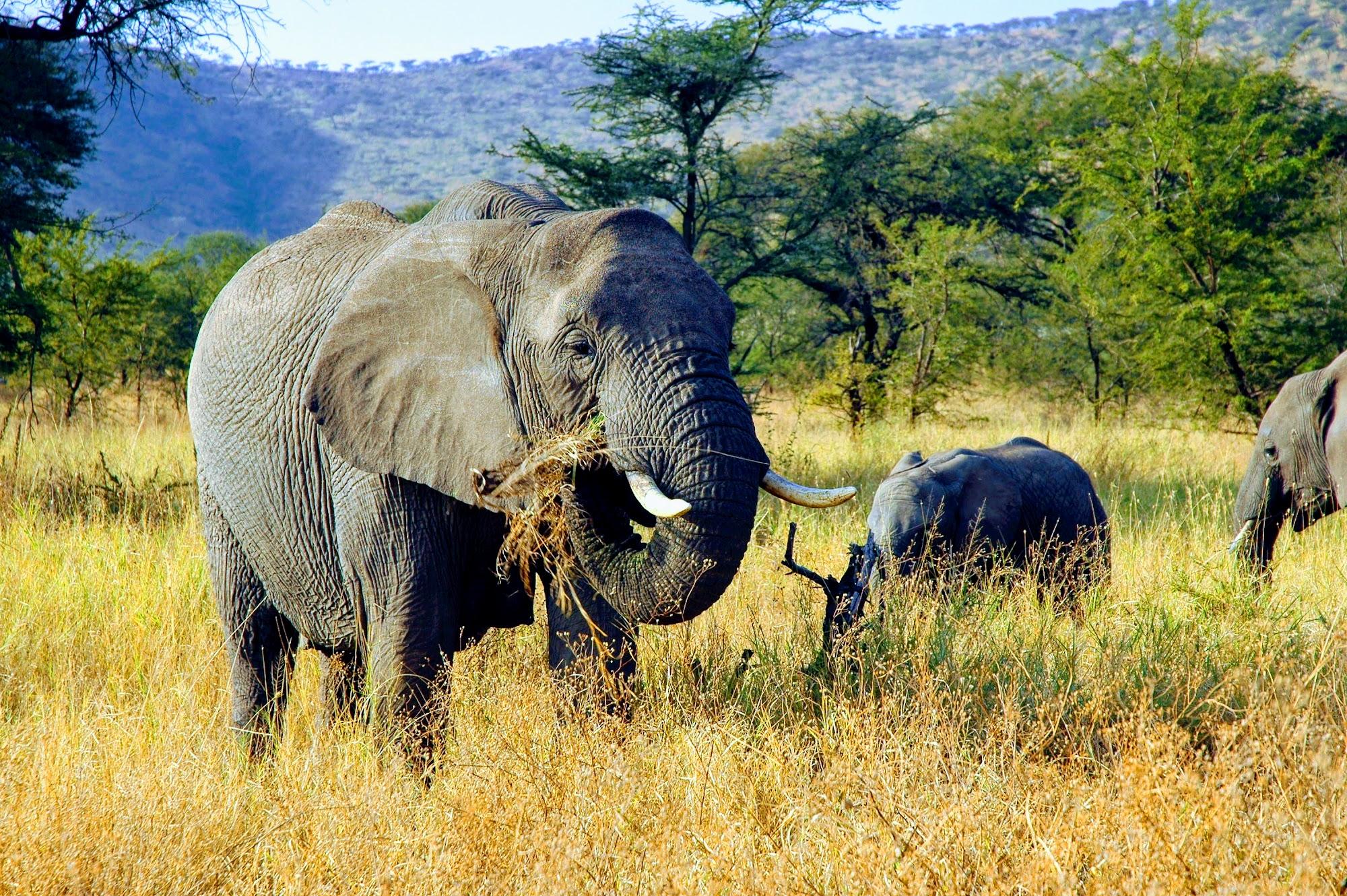 Reisinformatie Tanzania