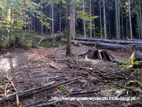 na szlaku na Biskupia Kopa wycinka drzew