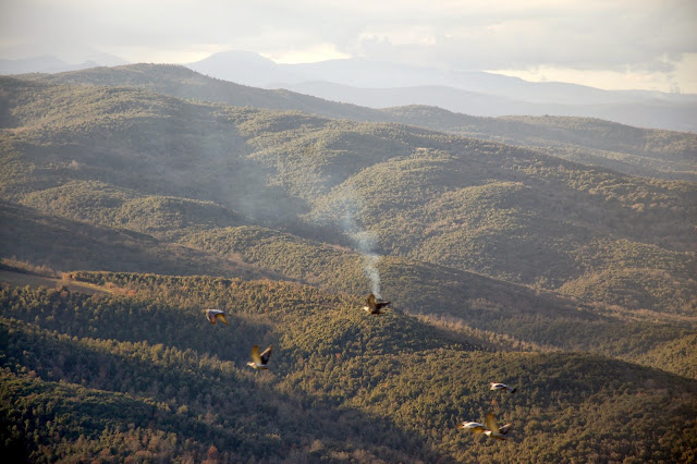 A winter view of Montalcino's extensive woods