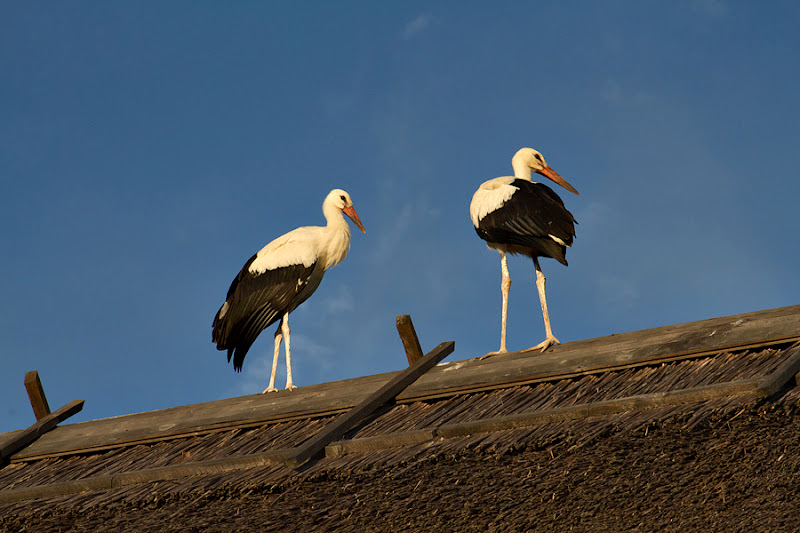 pensiunea Duna Delta Ciconia pasari birdwatching caiac