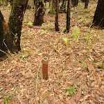 Small timber track marker in the Watagans (321902)