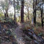 Flannel Flower track (203344)