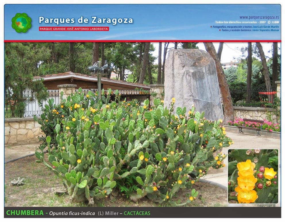 301 moved permanently for La buganvilla zaragoza