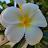 Dow-Jane Pei avatar image