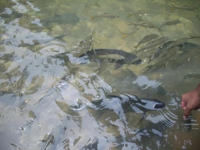 Santuari Ikan Kelah