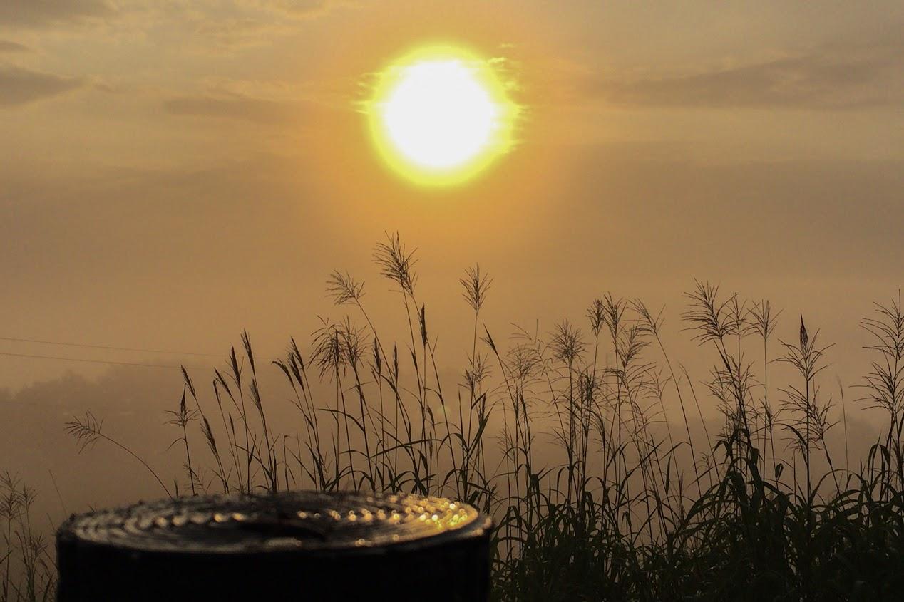 朝陽に煌めくすすき