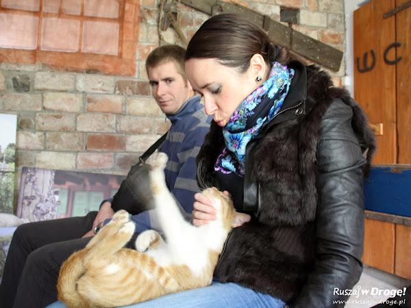Zabawy z kociakiem