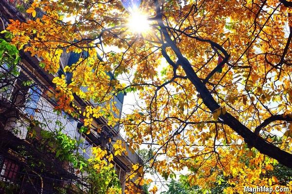 thơ nhớ mùa thu Hà Nội