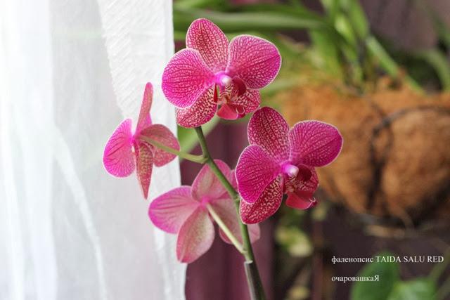 продам орхидейки IMG_3515