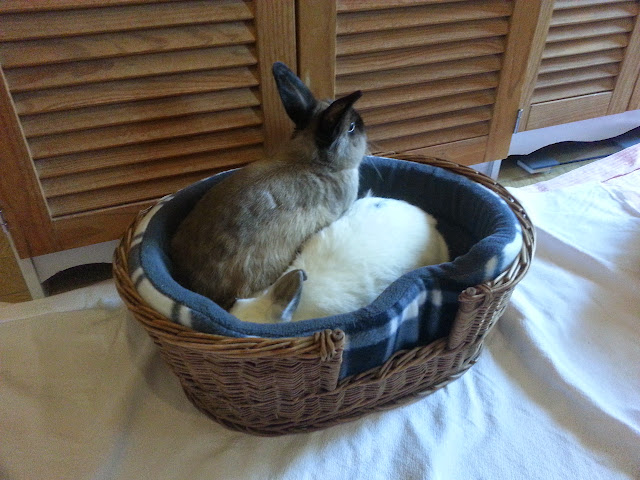 un lapin...?  - Page 3 20140905_180212