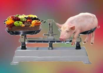 Чем можно заменить мясо в рационе