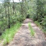 Davidson service trail (126334)