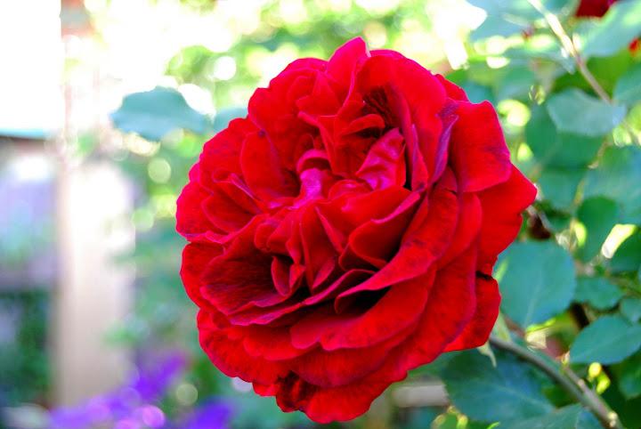 Una Flor Hermosa para una Belleza TU