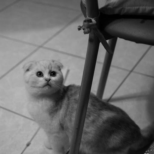 PENTAX 貓鏡攝影「辣虎就是愛」