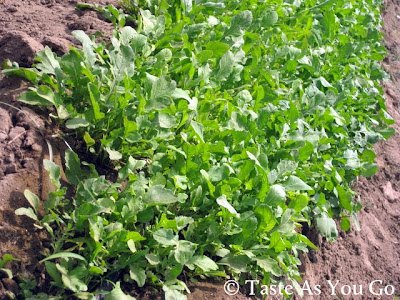Arugula at Los Tamarindos in Los Cabos, Mexico - Photo by Taste As You Go
