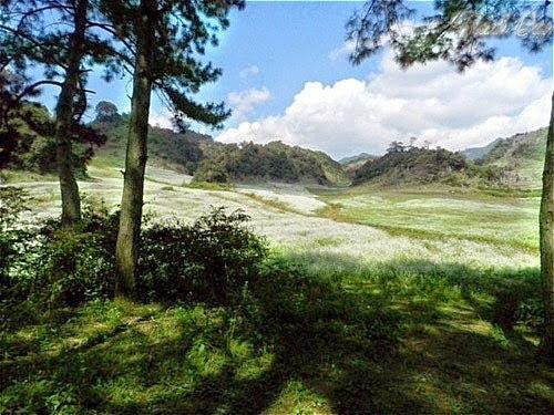 4 Du lịch Mộc Châu: ngút ngàn rừng thông Bản Áng
