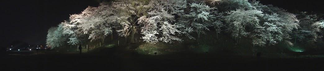 Panoramic of Gyeongju Cherry Blossoms Wolseong Forest