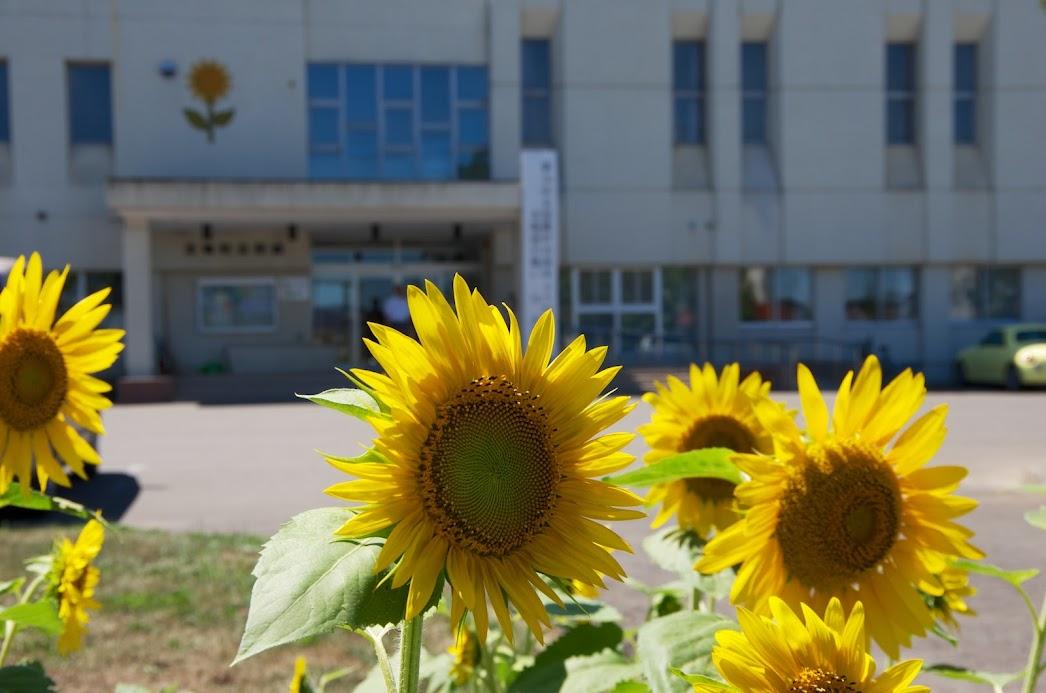 公民館に咲くひまわり