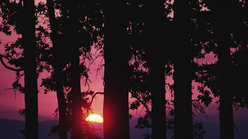 Setting Sun Through the Forest Trees.jpg