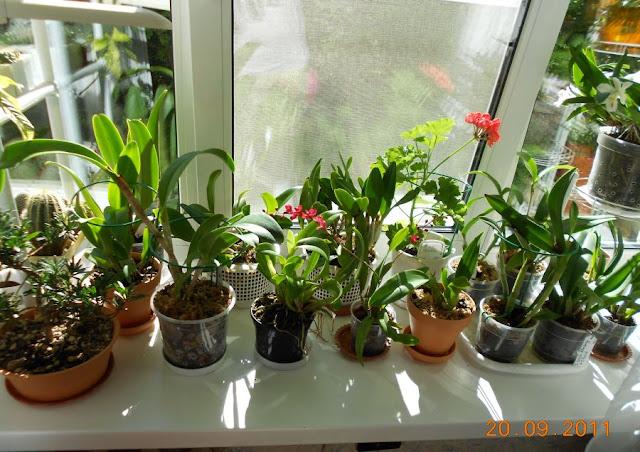 Размещение орхидей - Страница 5 DSCN0883