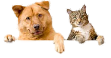 Imagem do Cão e do gato.