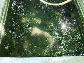 Blätterdach und Sonnenspritzer spiegeln sich