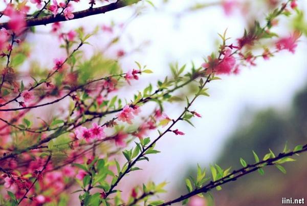 1001 bài thơ khoán thủ mừng Mùa Xuân về trong yêu thương