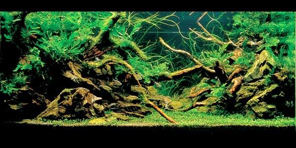The Nature Aquarium Style