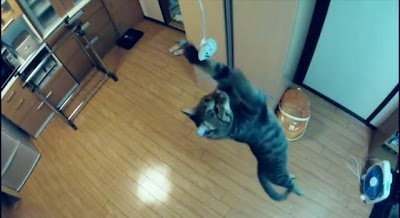 Nothing Can Rival the Jumping Cat